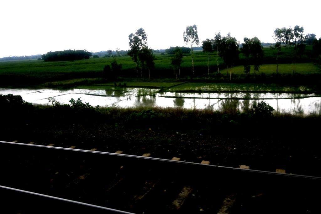 Green serene Bengal