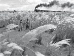 Pather Panchali train scene