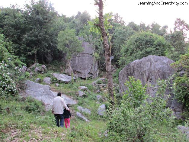 Trekking In Forests