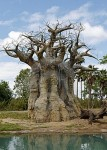 Its roots pointed to the sky. Its branches dipped toward the ground.