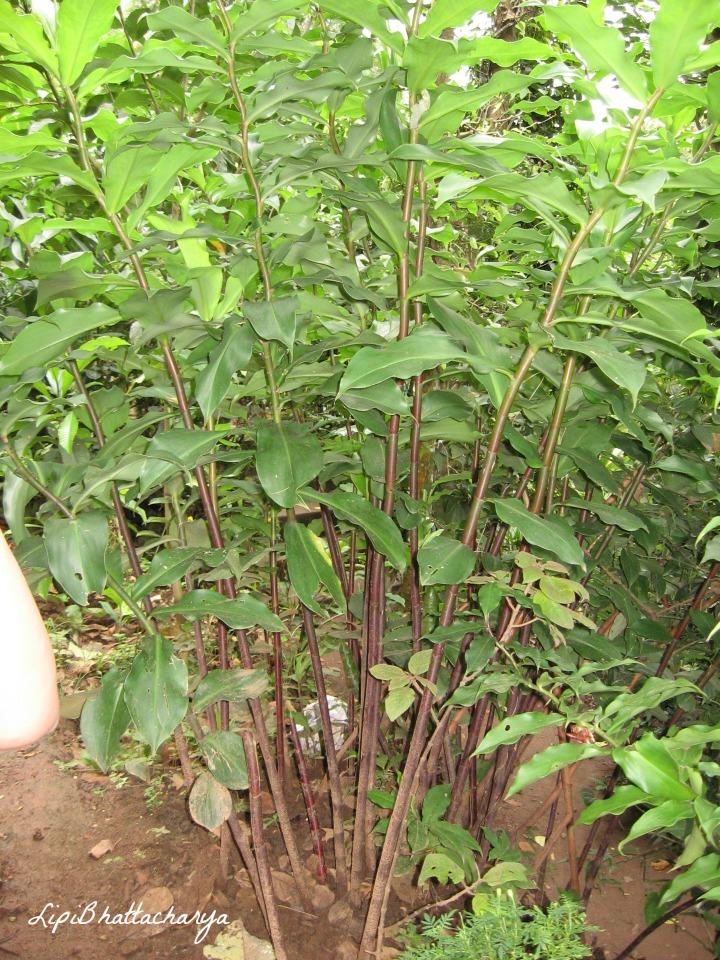 Kumarakom Spice Garden, Kerala