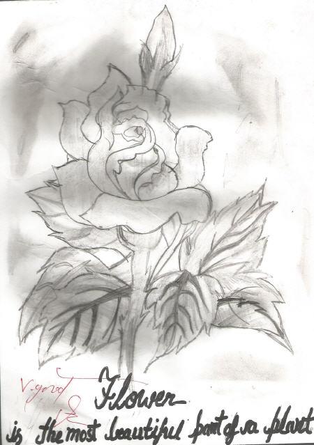 A Rose Sketch