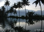 Mirror image of the rows of coconut trees on the still waters of the vivacious Vembanad Lake