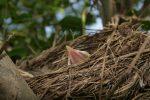 I would like to make a nest Where I can rest