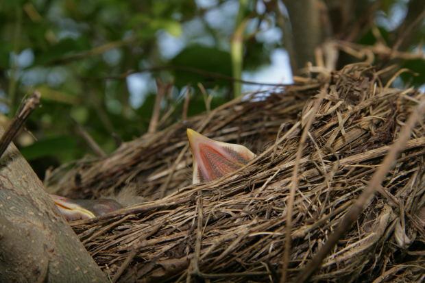 I would like to make a nest