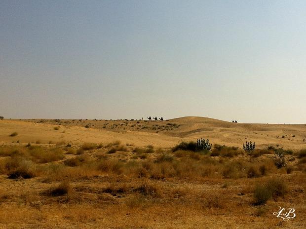 Camel ride into Thar