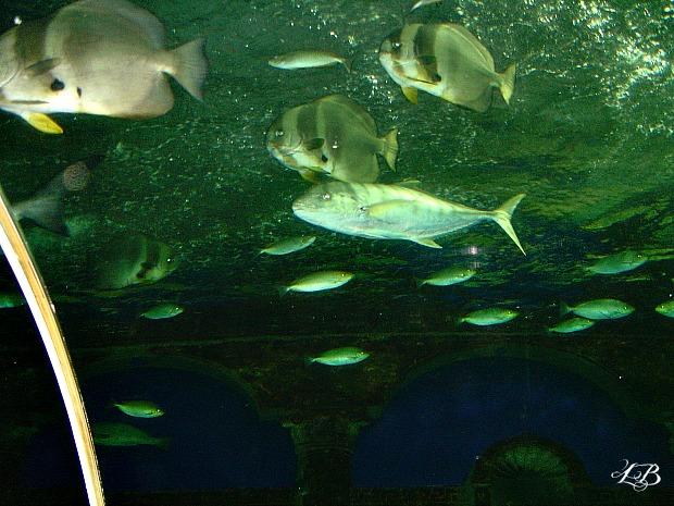 Underwater World, Sentosa Island, Singapore