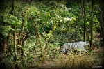Nandankanan Wildlife Sanctuary