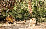Nandankanan Wildlife Sanctuary
