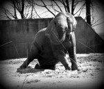 The elephants were so weak that they could hardly stand or walk.
