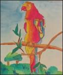 The Pionus Parrot