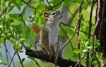 The squirrel loves to eat nutty things, When the tall tree spreads its wings.
