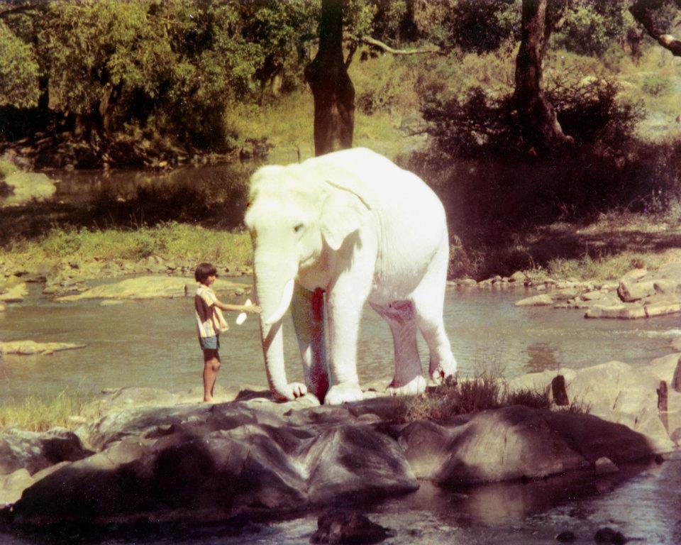 Ashwani & Airavat in Safed Haathi [The White Elephant]