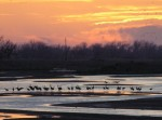 Hundreds of cranes roosting in the cornfields and along the Platte River