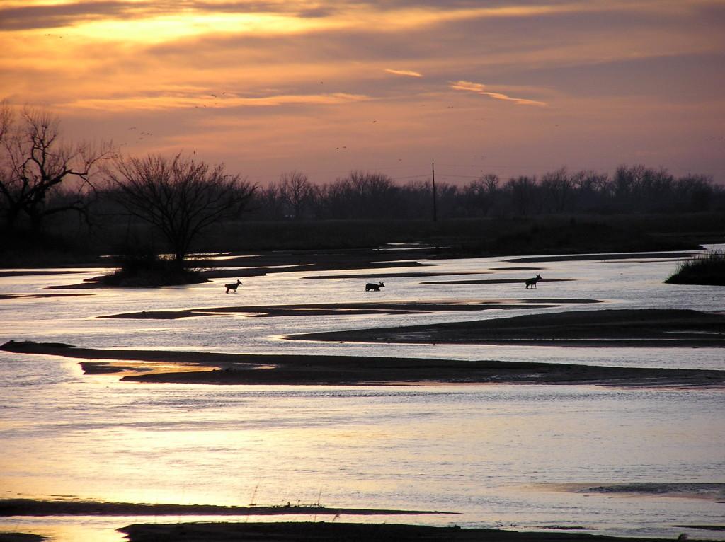 Deer crossing the Platte River
