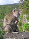 After some time, the mother climbed down, the baby furiously clinging to her,
