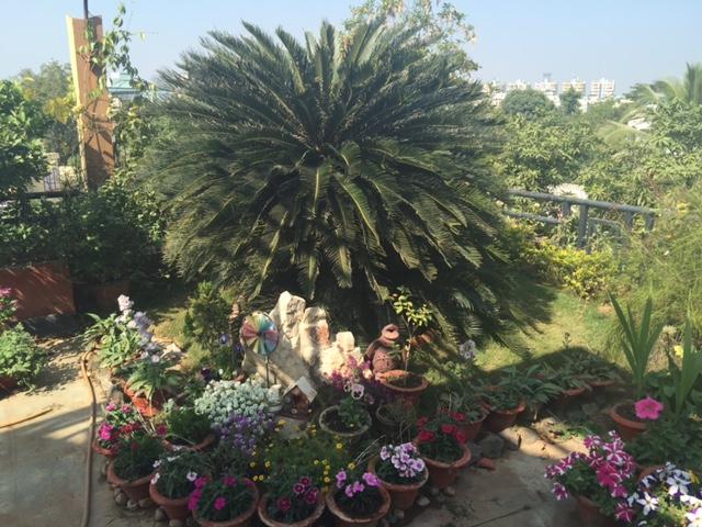 Gunjan's garden