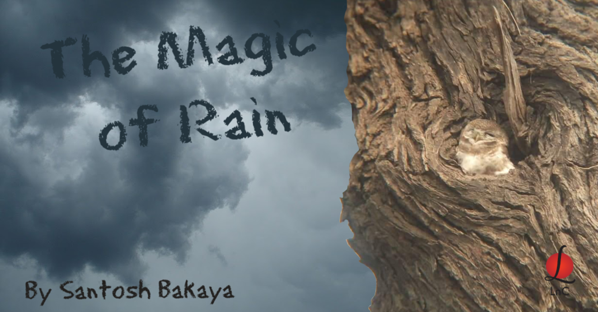 magic of rain morning meanderings 14 learning and creativity