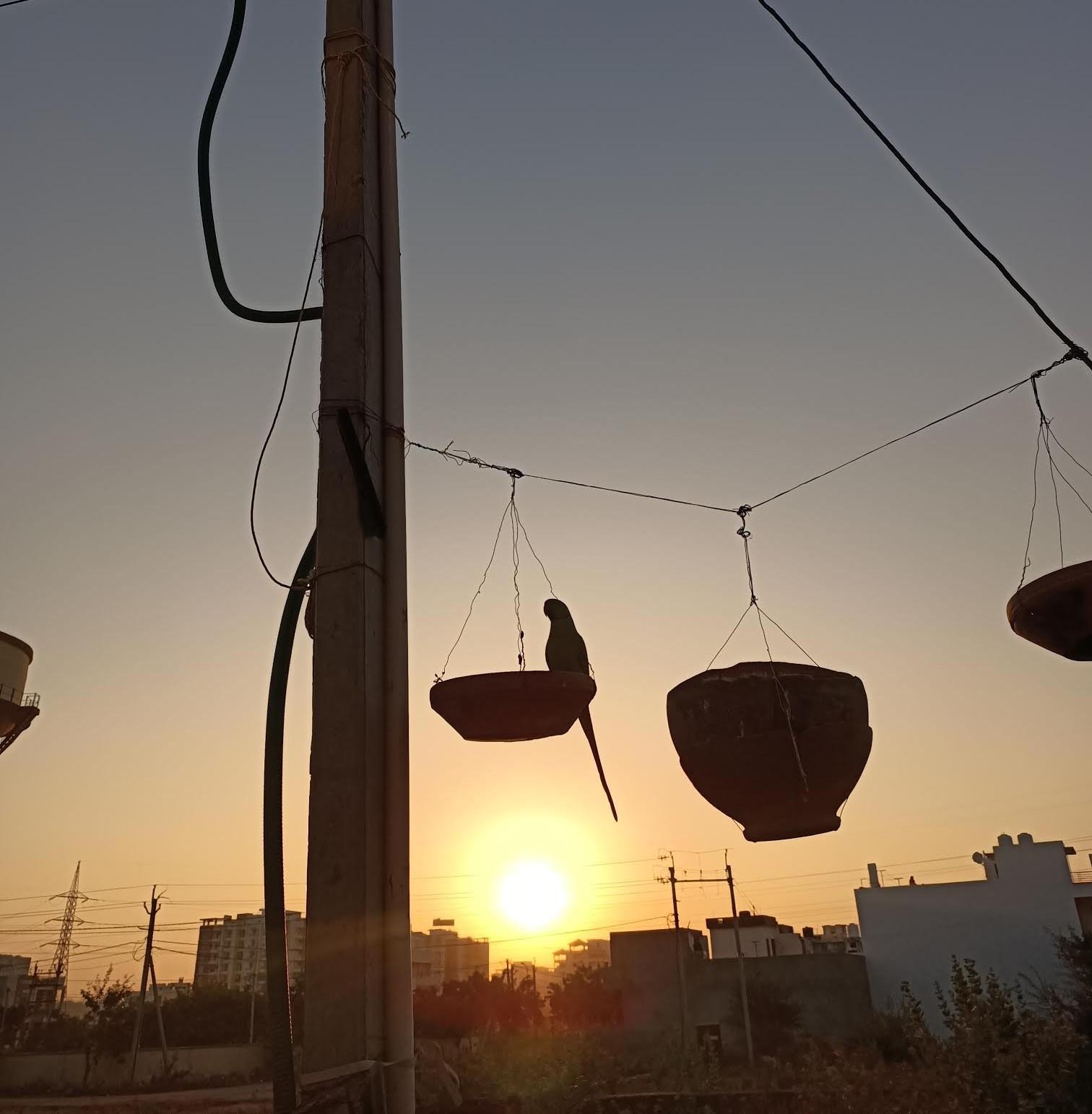parakeet morning meanderings